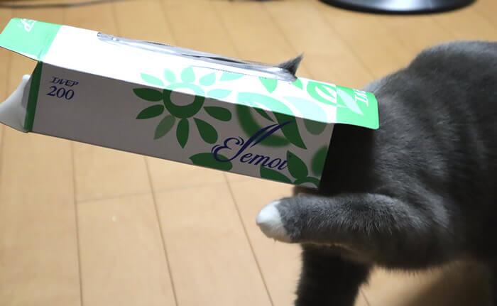 ティッシュの空箱に頭が入って抜けない猫