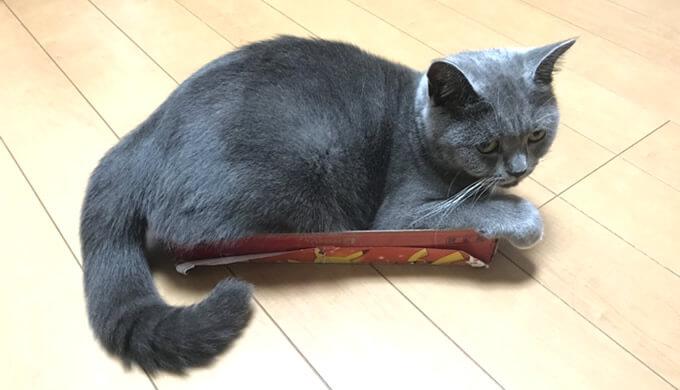 小さいダンボールに入りたがる猫