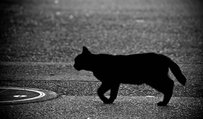 黒猫が不吉とされる理由