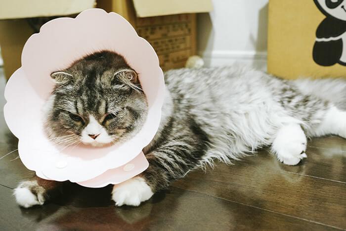 猫 換毛期 病気 毛球症