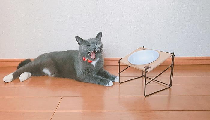 猫のご飯は時間を決めて下げる?下げない?