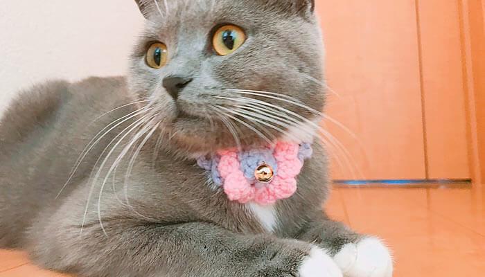 猫の首輪アップ画像
