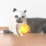SNOW猫認識スタンプのハロウィン
