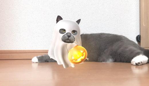 ハロウィンの猫の仮装はSNOWにおまかせ!?