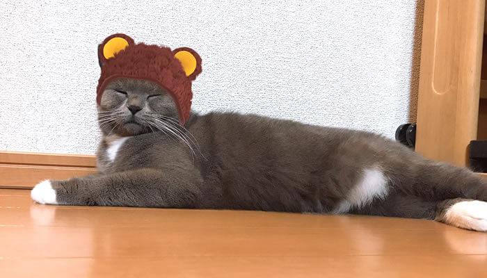 SNOW猫認識スタンプのクマのニット帽