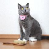 レデッカーの高級キャットブラシと猫
