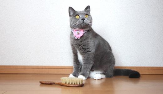 ブラッシング嫌いな猫がレデッカーの高級キャットブラシに挑戦!