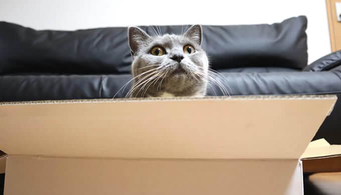 箱にこだわる猫