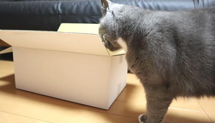 自分の好きな箱か確認する猫