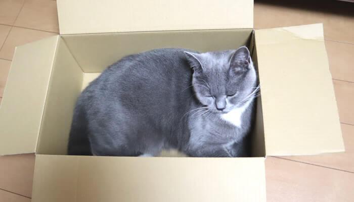 箱の中で寝る猫