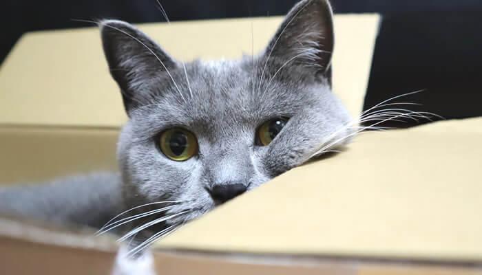箱のふちに顔を乗せる猫