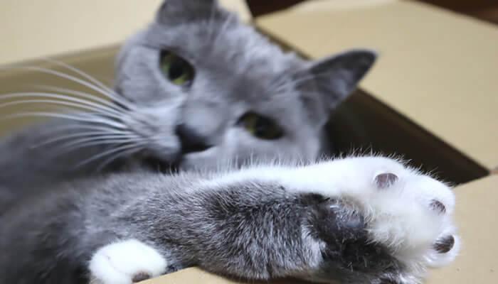 箱から足を出す猫