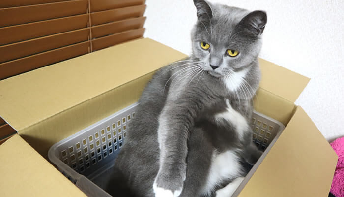 プラカゴが好きな猫