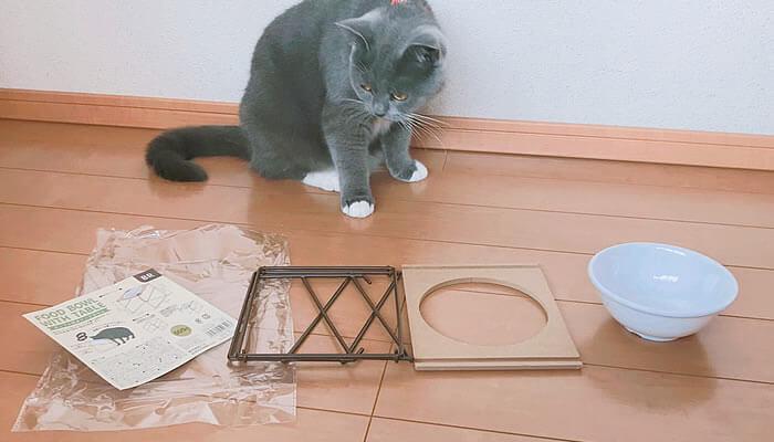 3COINS スリーコインズ 猫皿