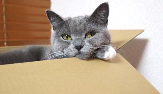 箱好きな猫のこだわりとは!?