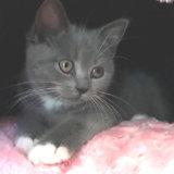 ドーム型ベッドで寝る子猫