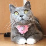 毛糸の首輪をつける猫