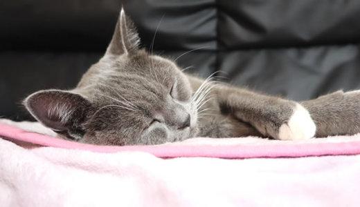 好きな毛布でふみふみしなくなった猫