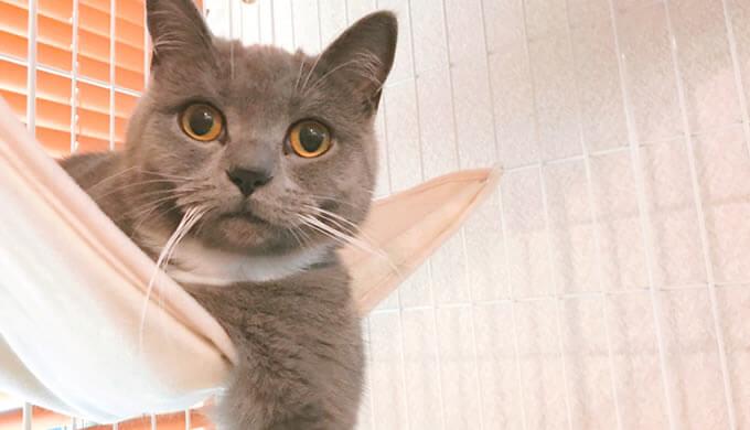 猫のハンモックお気に入り