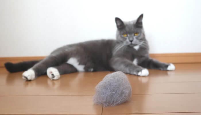 シャンプーで猫の抜け毛対策
