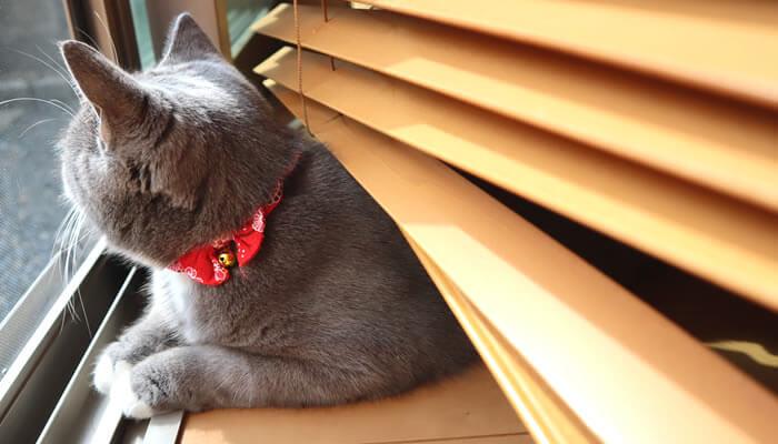 日向ぼっこしながらニャルソックする猫