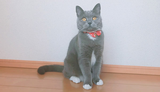 猫 1歳2ヶ月 18歳 様子