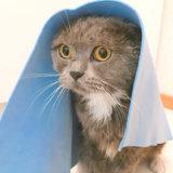 猫 お風呂 必要