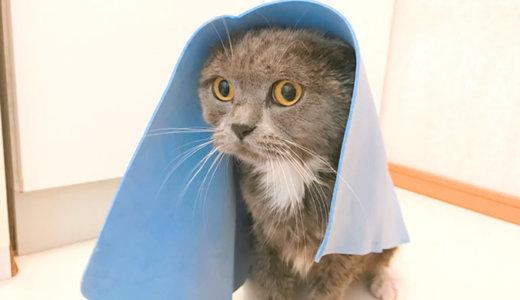猫のお風呂上りは秘密のアイテムで乾かす必要がない!?