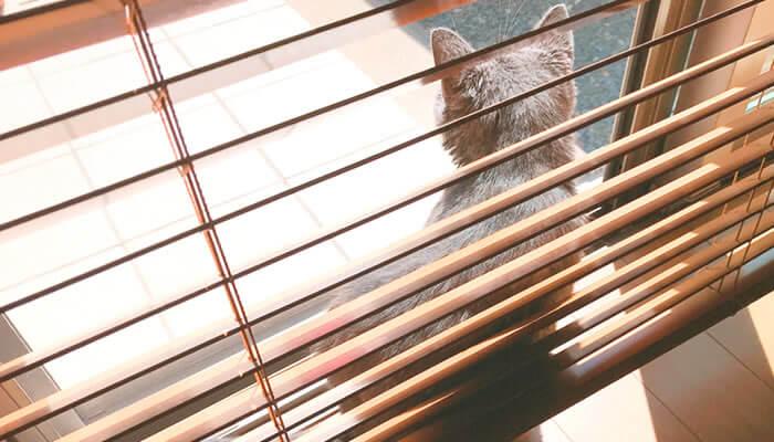 猫 お風呂 ドライヤー 必要
