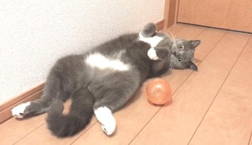 超簡単!猫が夢中になる手作りのボールおもちゃ