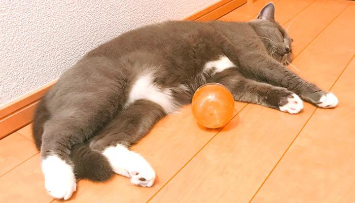 猫 おもちゃ お気に入り