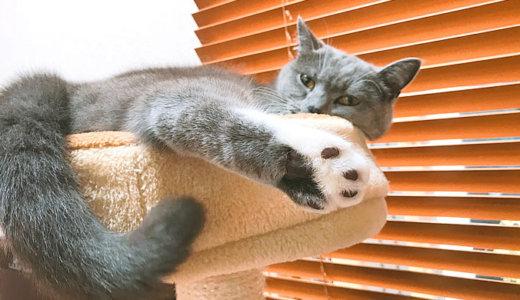 キャットタワーのベッドがお気に入り!狭くても寝る猫