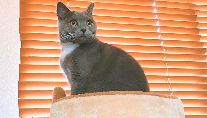 キャットタワー 猫