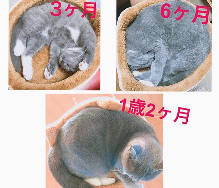 猫 アンモニャイトで大きさ比較