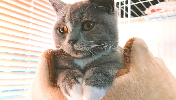 キャットタワーで寝る猫