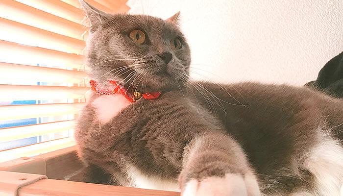 ブラッシングを嫌がる猫