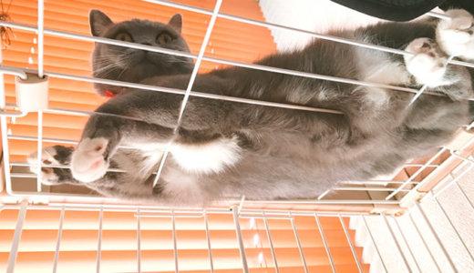 ケージ上でくつろぐと見える猫のモフモフの長いお腹の毛