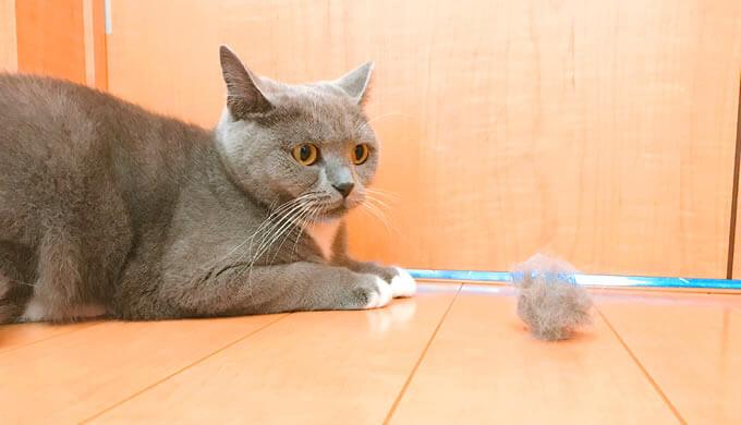ファーミネーターの毛玉が怖い猫