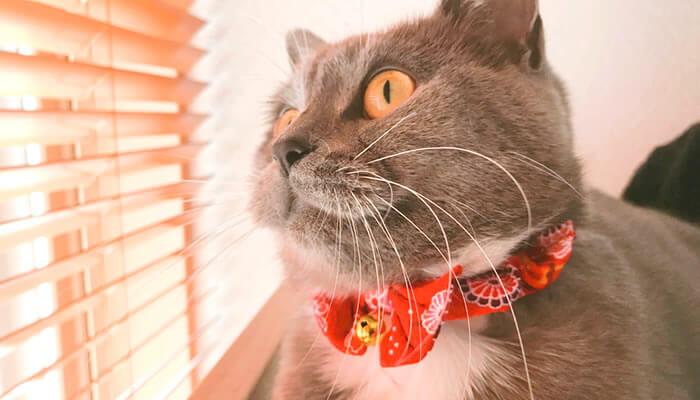 ふわもこの冬毛になる猫