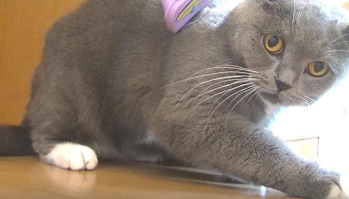 ファーミネーターを嫌がる猫
