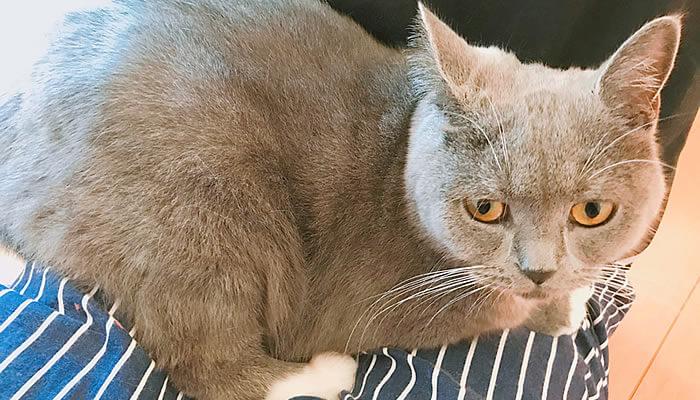 ファーミネーターが苦手な猫