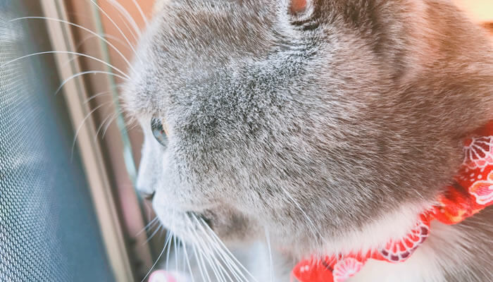 ニャルソックする猫の横顔