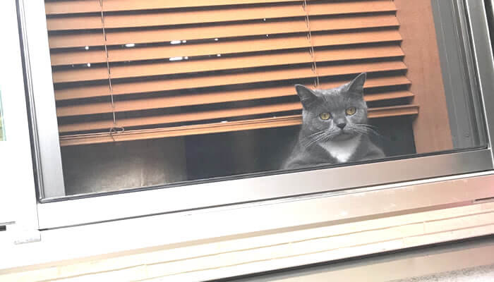 ニャルソックする猫を外から見た