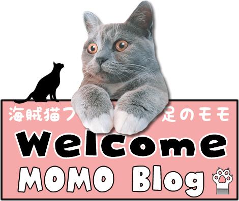 海賊猫ブログ白足のモモ