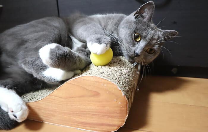 猫のおもちゃスポンジボール