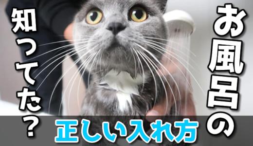 猫のシャンプーのコツと正しいお風呂の入れ方