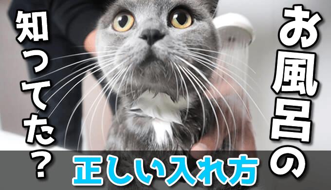 猫のシャンプー・お風呂の入れ方