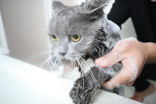 猫のシャンプー2度目