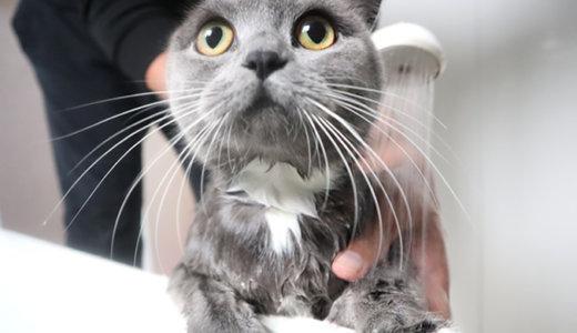 写真で分かる!猫のシャンプーのコツと正しいお風呂の入れ方