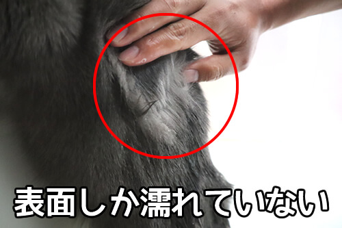 猫の毛は濡れにくい